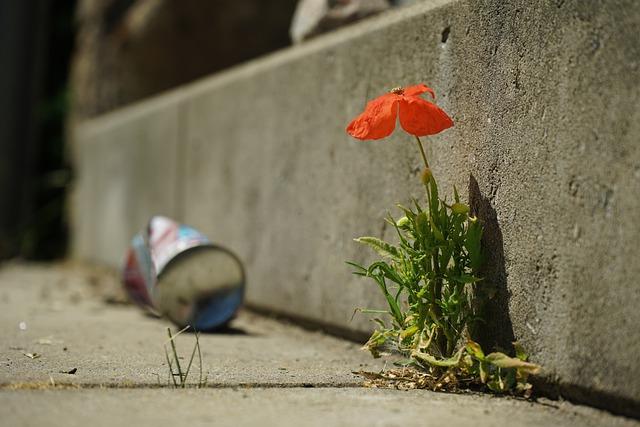 Kukka asfaltilla