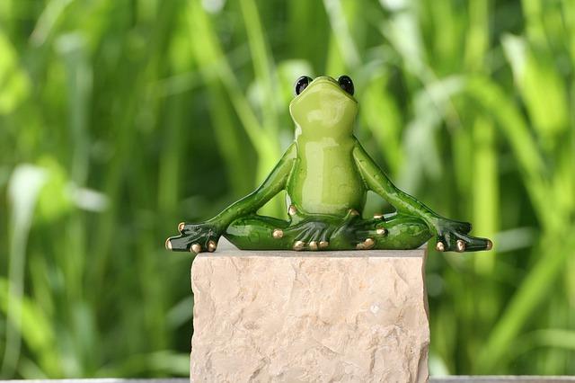 sammakko-meditoi