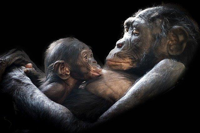 mammal-mum