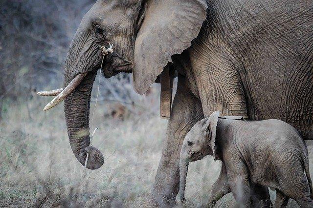 norsu-mamma